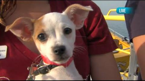 Adoptable Dogs from Anti-Cruelty Society on Seadog Cruises